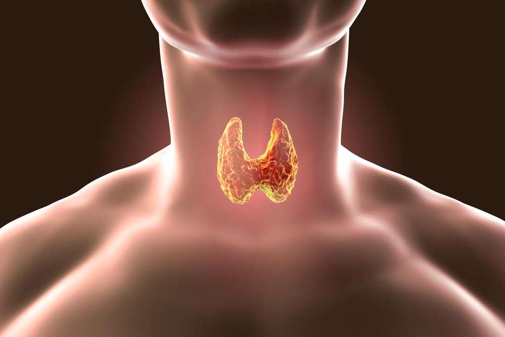 the biostation - Understanding Hashimoto's Disease and Hypothyroidism - Thyroid
